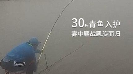 30斤大青鱼雾中追击 麦卡鲤RAY再立战功