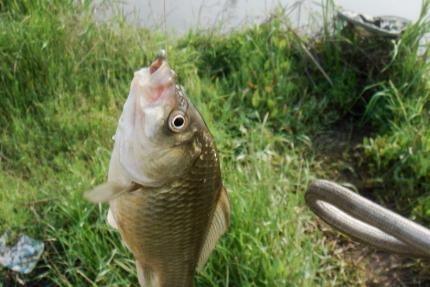 春分前后钓鱼技巧 春分前后钓鱼效果怎么样