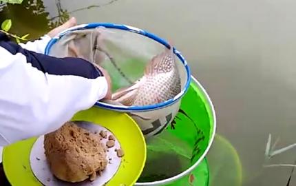 多魔HK6渔获视频小集锦