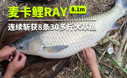 30多斤的草鱼8连斩!麦卡鲤RAY这次又玩high啦!