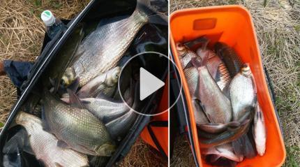 各色鱼种160多斤 黄石钓友爆护啦!