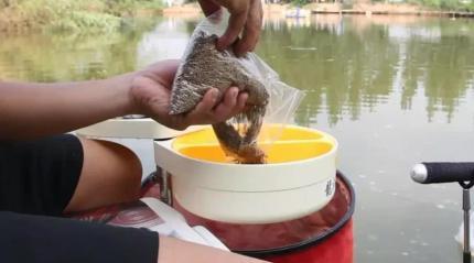 包食钓大鲤鱼的最佳时机 这种机会不要放过!