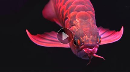 苏州法院拍卖了6条鱼 比恐龙还久远 能值200万