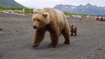 俄罗斯男子正钓鱼,突然来了一只熊!