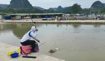 两斤多的鲤鱼 轻松入护 这竿子打竞技又轻又好用